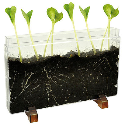 Boîte plastique qui permet de voir la vie sous terre.