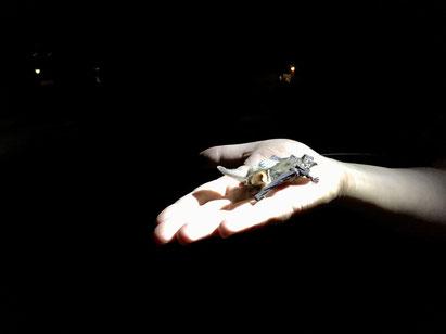 Das Sendertier startet von einer flachen Hand in die Nacht. Christian Söder, naturgeflatter
