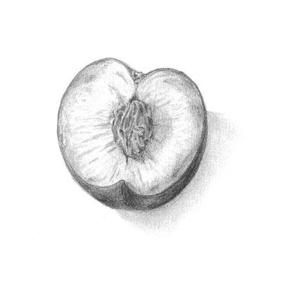 nina georgiev sketch peach