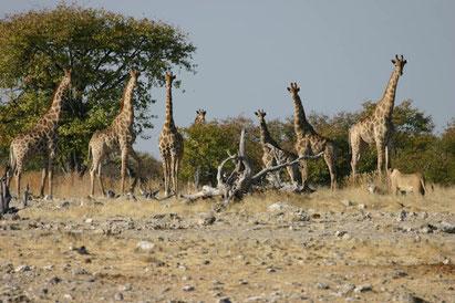 Rundreise Kapstadt bis Windhoek