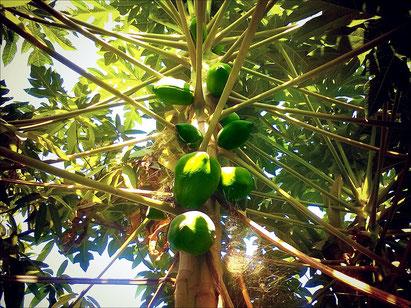 Pflanzenbezug Der Landmann