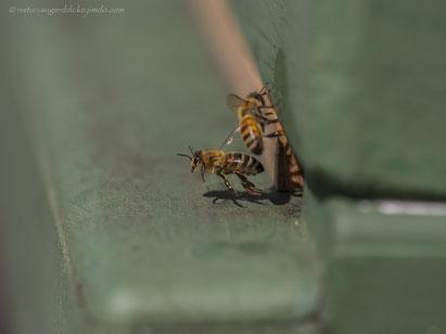 Biene, Bienen, Bienenstock, Imker, Honig