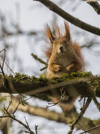 Eichhörnchen; Eichkatzl,