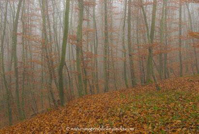 Buchenwald,Würm,Gauting,Herbst,