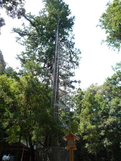 外宮の大木