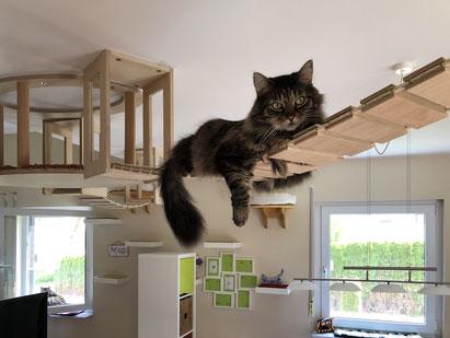 Bild: Wohnungskatze auf Catwalk