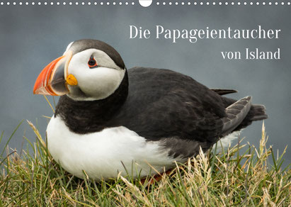 Die Papageientaucher von Island