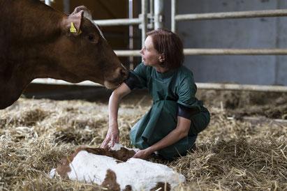 Tierärztin nach der Geburtshilfe mit Kuh und Kalb