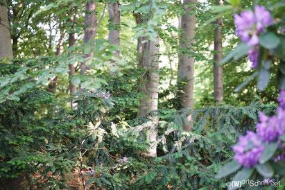 Tannen, Laubbäume und Rhododendren verteilen sich auf 210 Hektar