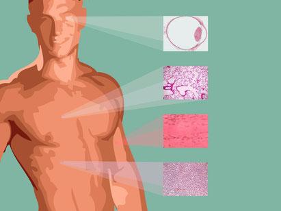 AAV tissue selection diagram.