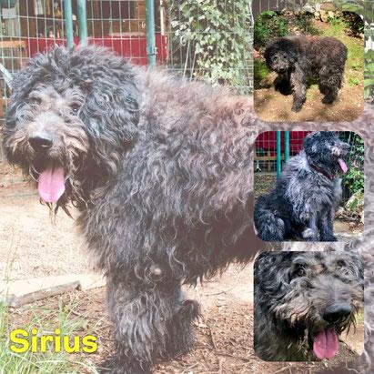 SIRIUS adopté en Juin 2018