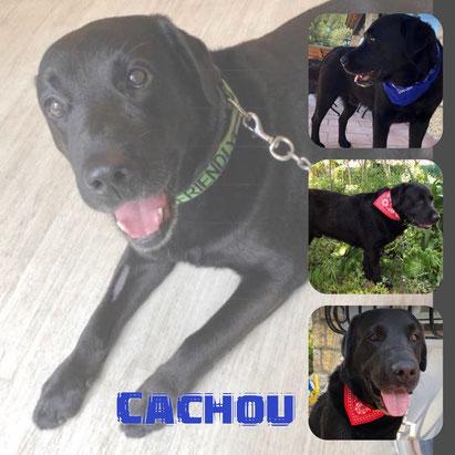 CACHOU adopté en Juillet 2018