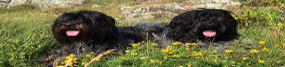 Die Auwaldwuffel - Cooper & Jane
