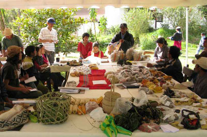 Semences agroecologie permaculture amerique latine
