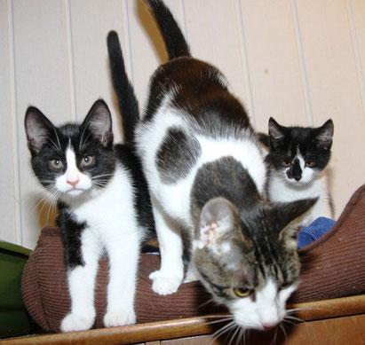 Die Katzenmama mit ihren Babies