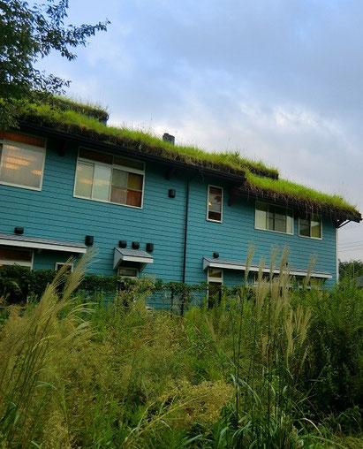 9月25日(2013) 自然と共生した建物(三鷹市内)