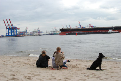 Hund am Elbstrand in Hamburg