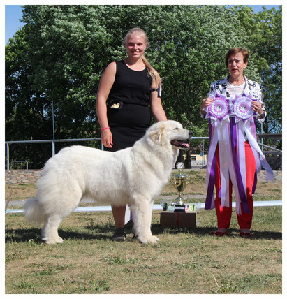 Echo de'Chien Bellatrix - BOB in Estonian Pyrenean Mountain Dog Specialty Show