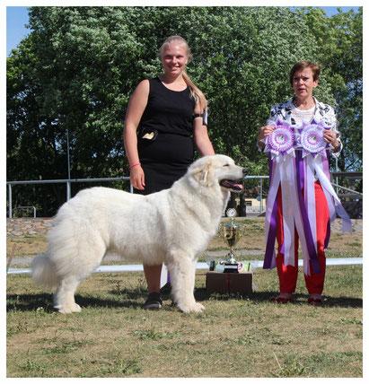 Echo de'Chien Bellatrix - BOB in Estonian Pyrenean Mountain Dog Specialty Show