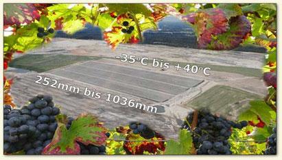 Lausitzer Wein Klima und Geologie
