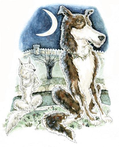 Laila, die schöne Hündin, Freundin vom Wolf  © Caroline Ronnefeldt