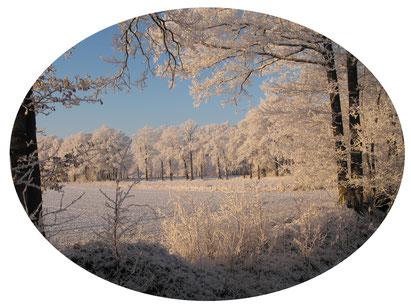 Winterzauberwald Foto © Winfried Haas