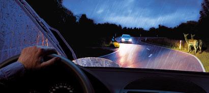 Ein Mann fährt bei Regen mit Ihrem Pkw in eine leichte S-Kurve, als ihm jemand entgegen kommt. Am rechten Fahrbahnrand stehen zwei Rehe. / Bildquelle: BOSCH Service