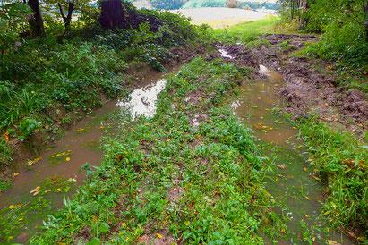 Im Chlosterwald bei St. Urban finden sich vor allem auf den nassen, lehmigen Wegen schlammige Bodenstellen, welche dem seltenen Uferläufer zusagen.