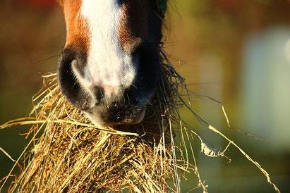 voedingsdeskundige paard, voedingsadvies, rantsoenanalyse