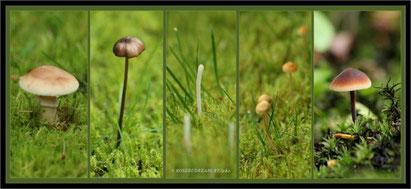 """Das in der Mitte sind auch Pilze: """"Keulchen"""""""