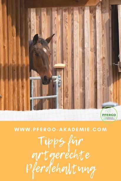 Ergotherapie für Pferde: Mit PFERGO Pferdeergotherapie zu einer artgerechten Pferdehaltung