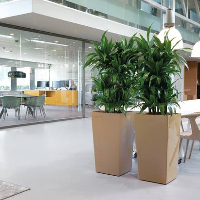 Location et entretien de plantes d'intérieur sur Paris