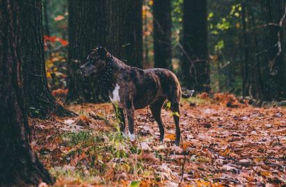 Chien : le mythe des ordres de base en éducation canine