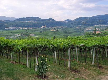 Valpolicella-vin-rouge-Italie