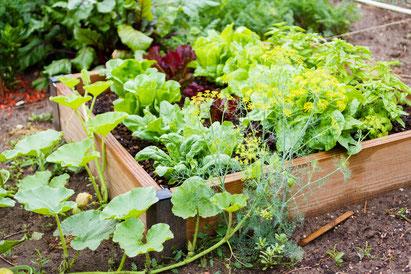 Gemüseanbau © Oleastro