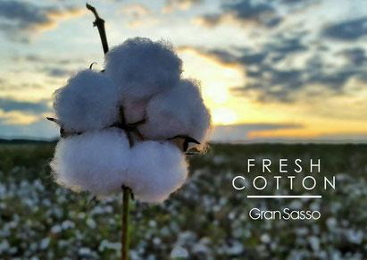 maglioni-gran-sasso-puro-cotone-sweater-fresh-cotton-