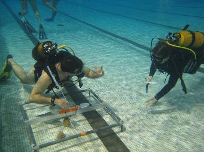 Une nouvelle activité sous l'eau