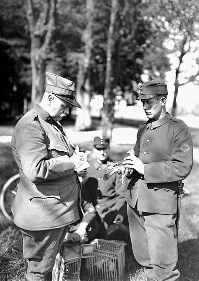 Abfertigen einer Meldung durch Brieftauben im 1. Weltkrieg
