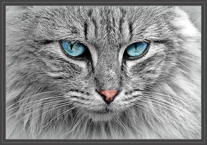 Foto:   pixabay.com -  Symbolfoto