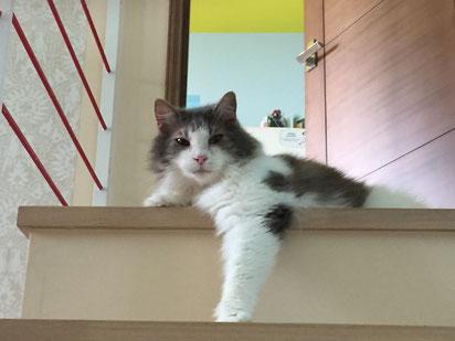 階段とネコ