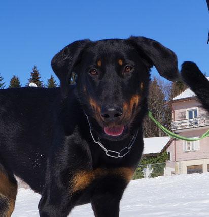Abeline auf der Schneewiese (Febr. 2015)