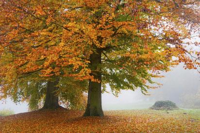 Fotoworkshops Landschaftsfotografie, Baum, Herbst,Sebastian Kaps