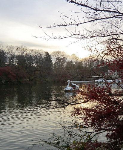 12月18日(2013) 初冬の井の頭池:井の頭公園