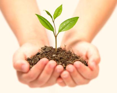 種から育てる…人材の育成にも通じるものがありますね!