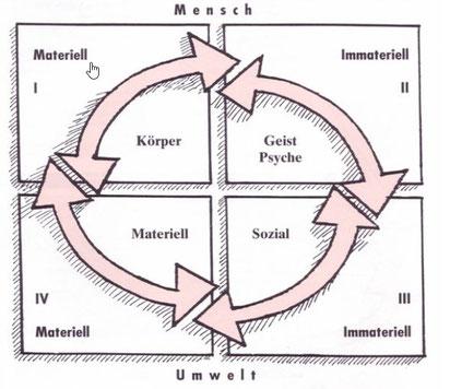 Modell der vier Lebenskreise