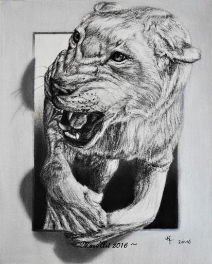 Portrait de lionne au graphite