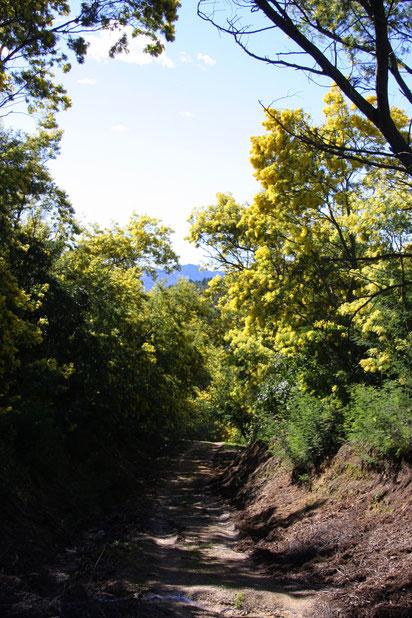 Bild: Wanderung im Mimosenwald im Tannerongebirge