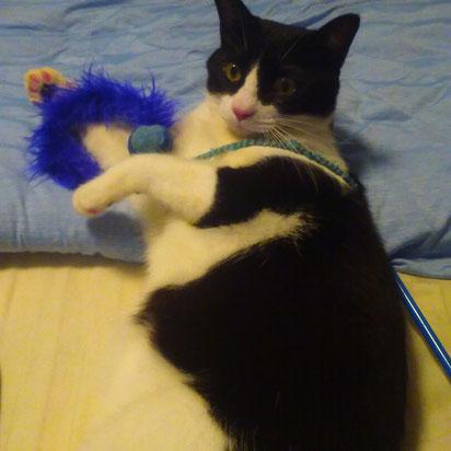 ジョニーくん 猫ちゃん 猫 にゃんこ ねこ ネコ ペットシッター シッティング中 川崎市