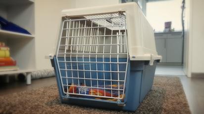 Katze Erstausstattung Katze - Große Transportbox