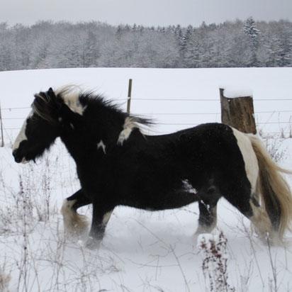 So wird natürlich mehr Energie verbrannt als bei Pferden, die warm eingepackt im Stall stehen!